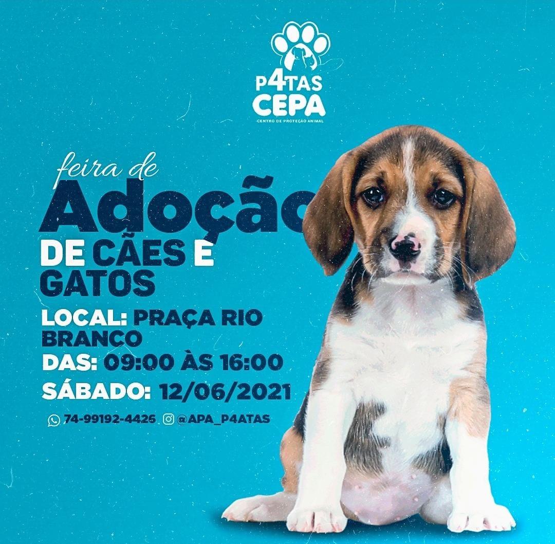ONG Quatro Patas realiza Feira de Adoção de Animais neste sábado